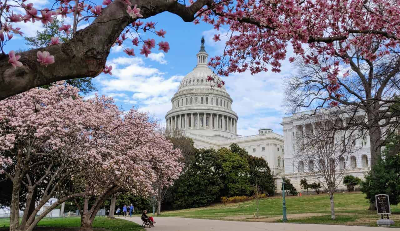 U.S. Capitol grounds magnolias in March 2020